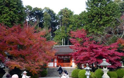 花の寺18