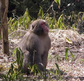 花の寺:猿