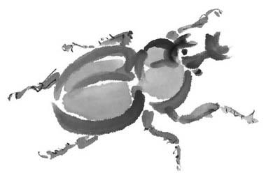 カブトムシ素描