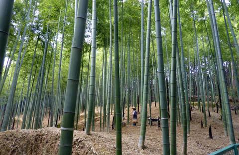 稲荷山の竹林