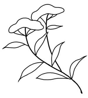 女郎花図1