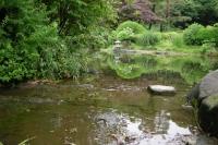 上の池と下の池の途中から