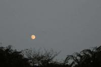 薄い雲にかかる十五夜の月を眺めていました。