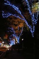 上戸田商店会でイルミネーションの点灯イベント