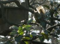 フサフサの尾が輝くニホンリス