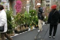 戸田市役所通りで植木市が開催されました。