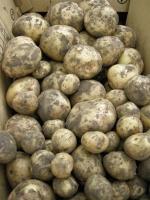 戸田市の生ゴミから作られた有機肥料「とだユウキ」を使って、さいたま市の農家さんに育ててもらったジャガイモの受け取り。