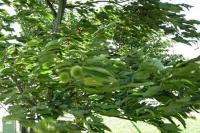 風が強く、葉が枝ごとなびいています。
