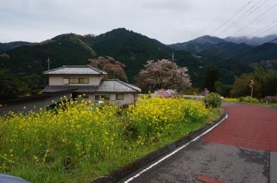 春の大野、菜の花が真っ盛り