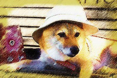 暑いから 帽子  かぶせて あげる