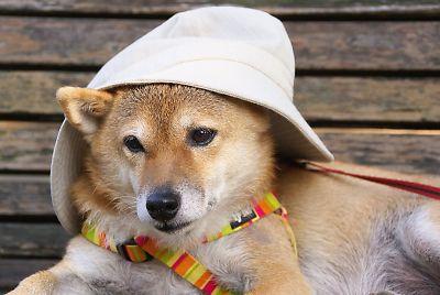 おかあさんの 帽子を あげる