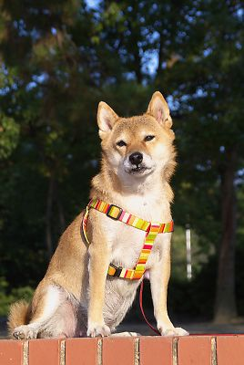 そうや はな 美犬やぁ 〜 v(^o^)v