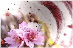雪中華と積雪の桜