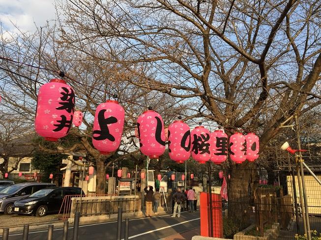 染井よしの町会桜まつり