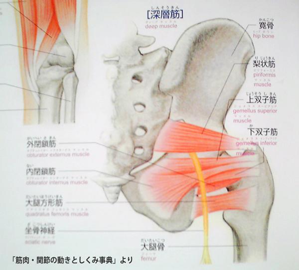 大 子 骨 大腿 転 大腿骨転子部・転子下骨折(だいたいこつてんしぶ・てんしかこっせつ)