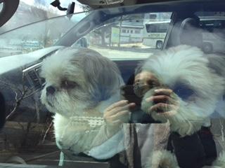 車中ワンコたち