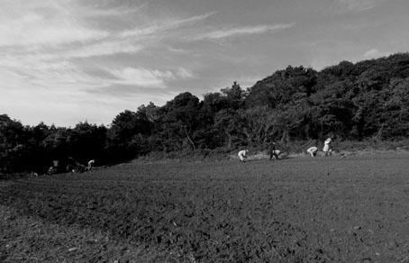 ド・ロ様の畑