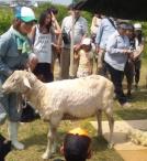 羊1.JPG