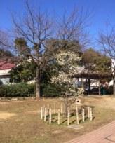 らふと庭.JPG