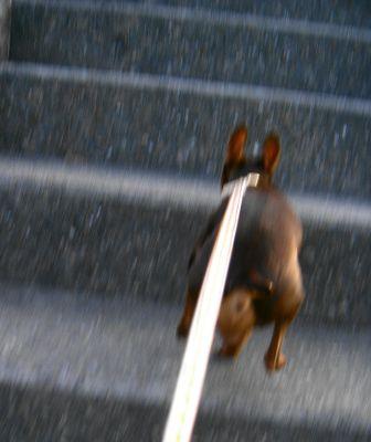 階段駆け上がり