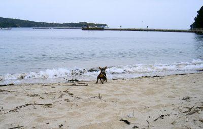 波におっかなビックリ