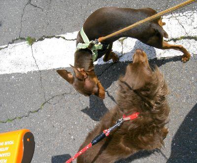 保健所で狂犬病の予防接種