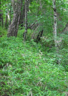森の中を行く