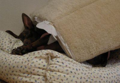 ベッドの使い方が