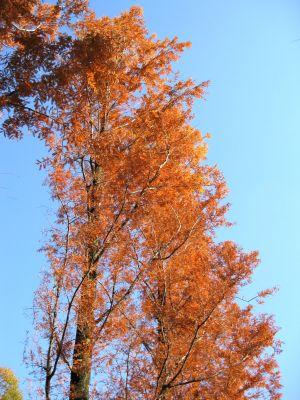モリコロの紅葉