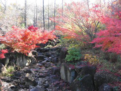 モリコロの秋