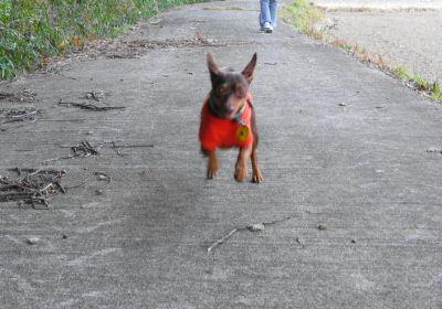 初散歩、初走り