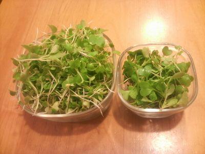 間引き菜サラダ1