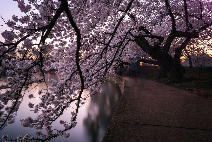 spring-japan-cherry-blossoms-national-geographics-77.jpg