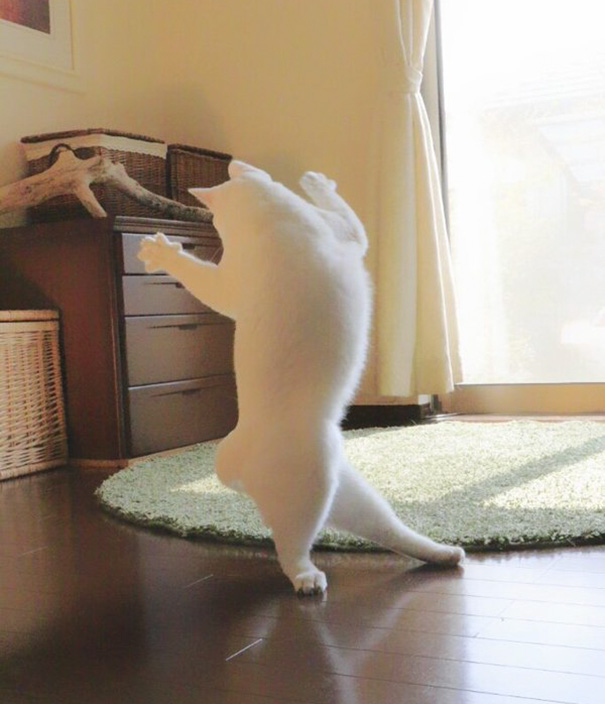 ballet-cat-japan-7.jpg