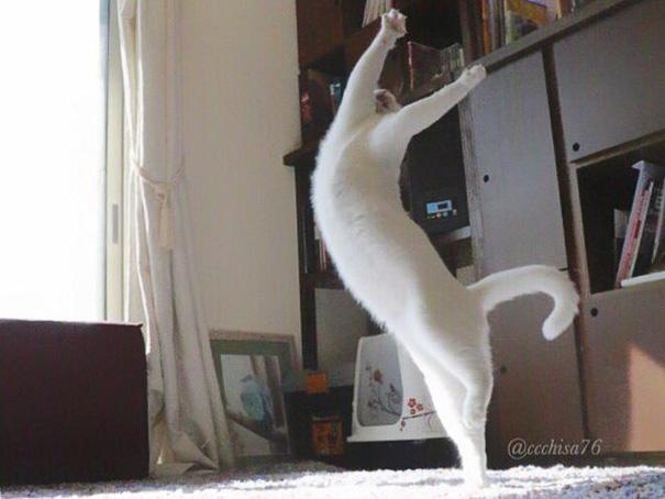 ballet-cat-japan-13.jpg