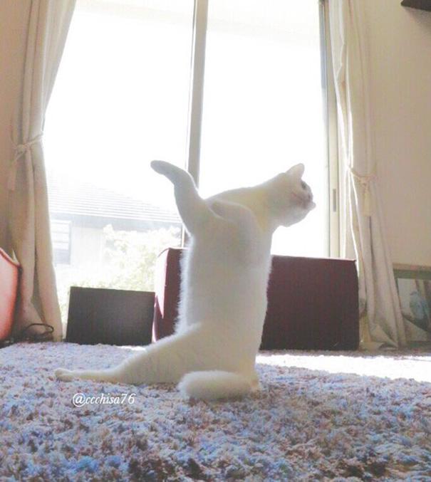 ballet-cat-japan-17.jpg