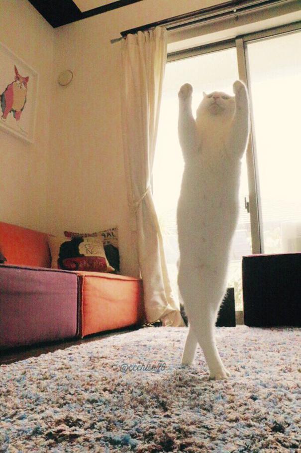 ballet-cat-japan-43.jpg
