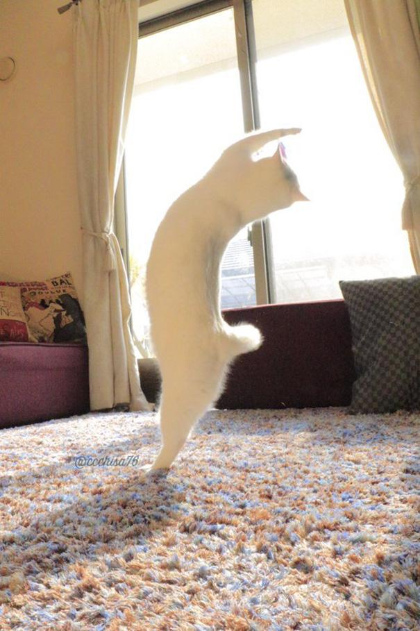ballet-cat-japan-44.jpg