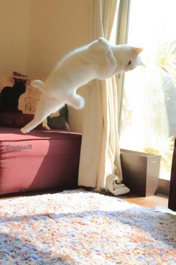 ballet-cat-japan-45.jpg