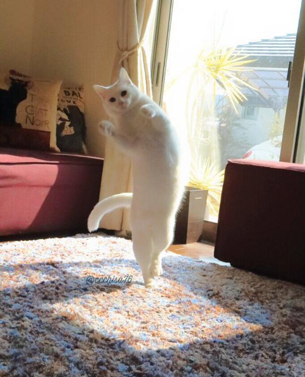 ballet-cat-japan-46.jpg
