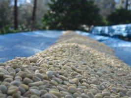 エリンバリコーヒー豆