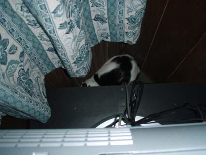 テレビの後ろに隠れるチョビ