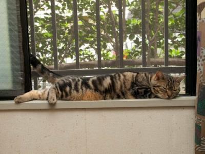 こっちの窓でも半間猫
