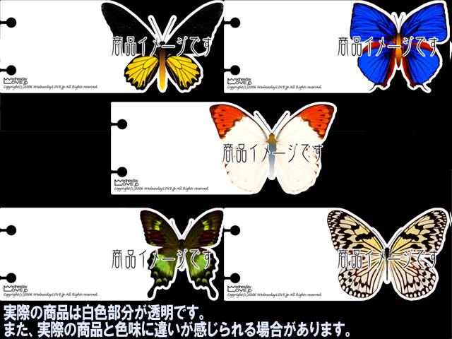 蝶インデックス見本