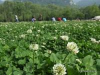 少林寺の花