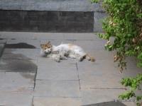 天壇公園の猫