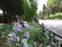 故宮博物院・武英殿ちかくの花
