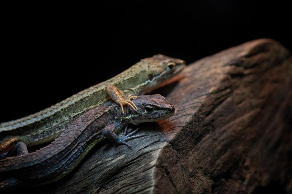 キエルキンのペット2