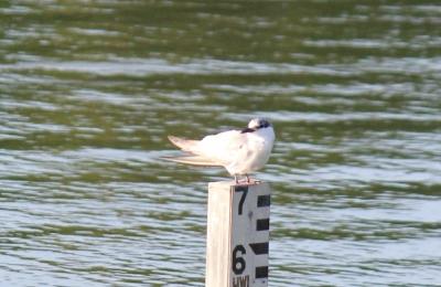 鵜の池の野鳥