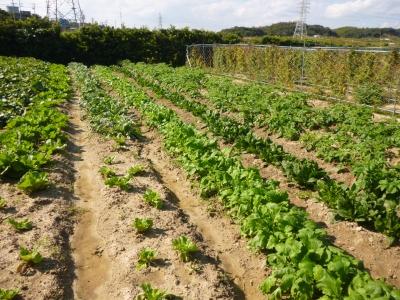 西尾農園の収穫